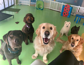 Doggy Daycare Canberra