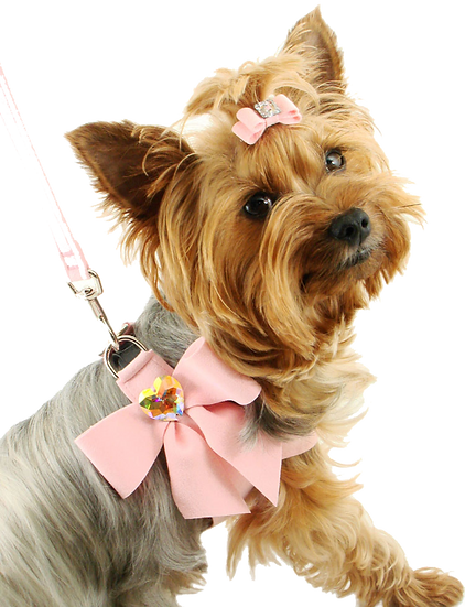 Dog Grooming Canberra