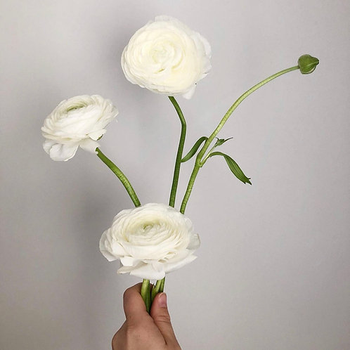 Ranunculus Bunches