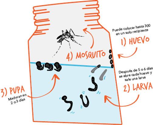 Dengue3.jpg