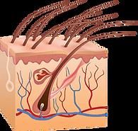 laser affect hair-03.png