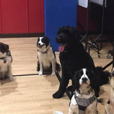 Well behaved dogs at the hub