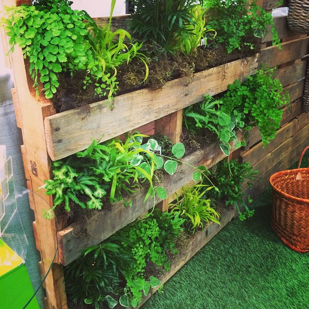 Setting up my living pallet wall for my