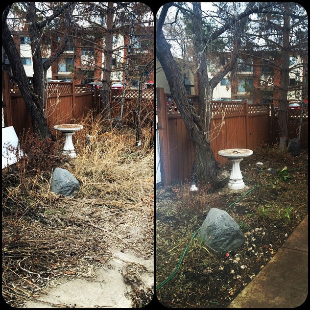 Before and after of a spring clean up.jp