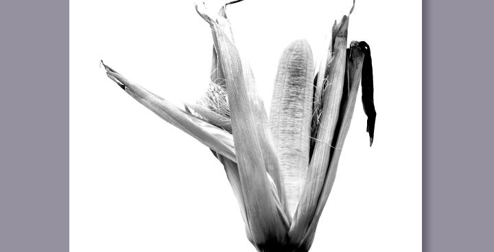 Corn + Banana