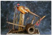 pheasantlargejohn.jpg