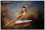 pheasantdoclarge.jpg