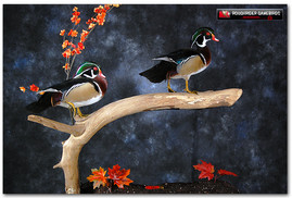 Wood Ducks, Wood Duck Mounts, Bird Taxidermy, Waterfowl Taxidermy, Roughrider Gamebirds