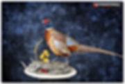 pheasantaustinlarge.jpg