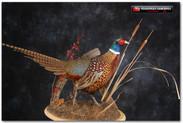 pheasantshowlarge_000.jpg