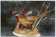 pheasantshowlarge.jpg