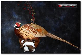 pheasantwalllarge_000.jpg