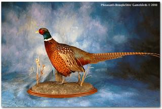 pheasantdularge.jpg