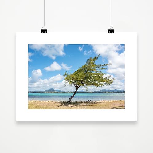El viento y el árbol