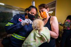 Veterinárias Luciana Guimarães Santana e Priscila Mahlmeister realizado exames de checagem no animal recém resgatado.