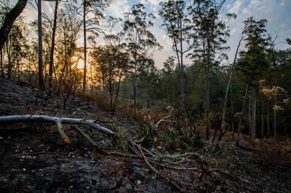 Pôr-do-sol em meio à paisagem destruída pela queimada.