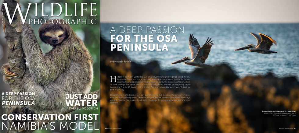 Wildlife Photographic Magazine 04.2021