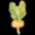 oignon grelot