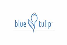 blue-tulip-2-600x403.png