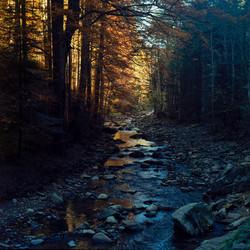 Late Autumn II