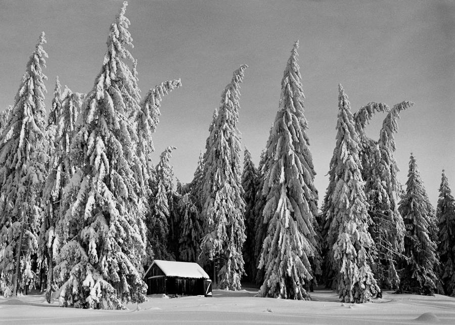 Silent Winter