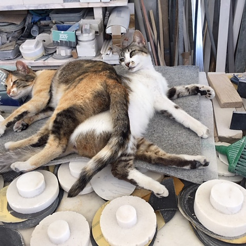 Cats Workshop