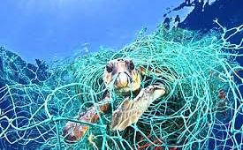 Animais se emaranham em redes