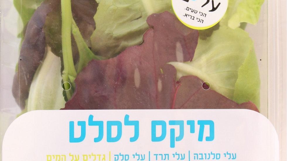מיקס עלים לסלט - Leaf mix for salads