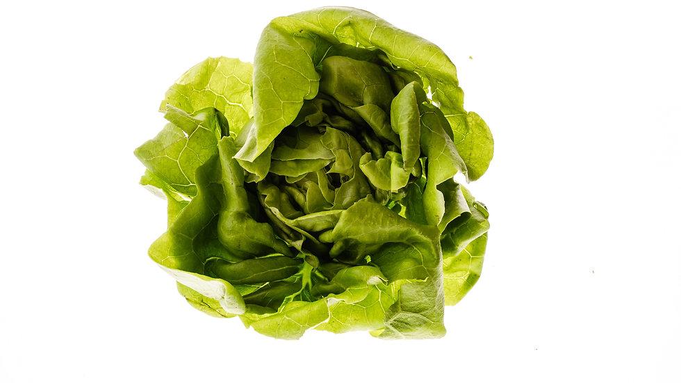 חסה פרנק - Frank lettuce
