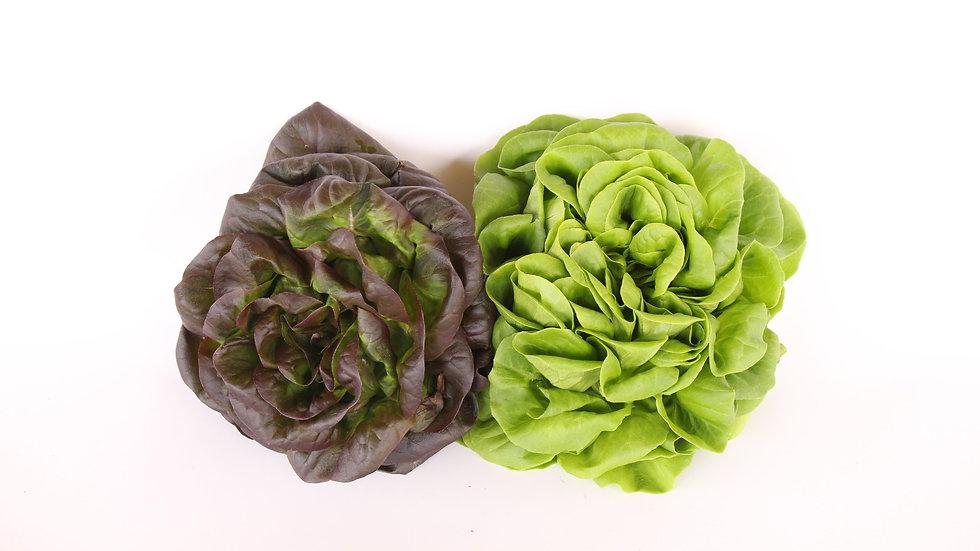 חסה סלנובה - Salanova lettuce
