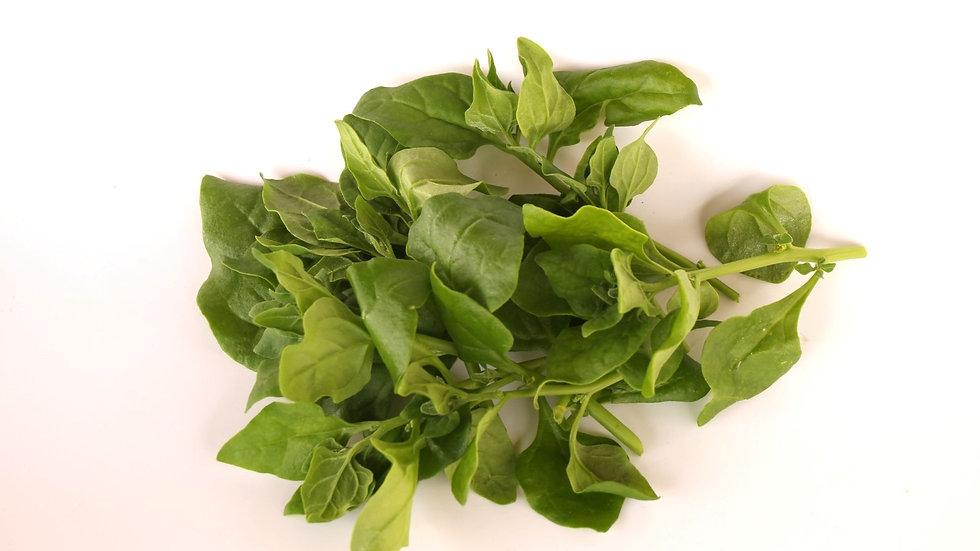 תרד ניו-זילנדי - New Zealand spinach