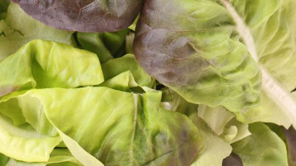 עלי סלנובה - Salanova leaves