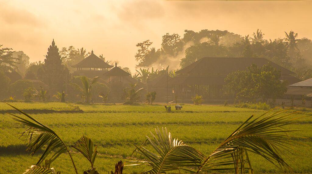 sunset rice field temple