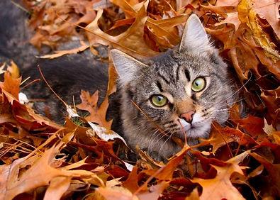 cat-in-leaves.jpg