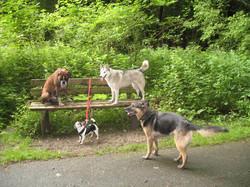 Nandou, Biene, Laika & Lilou