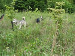 Laika, Sawyer & Vinga