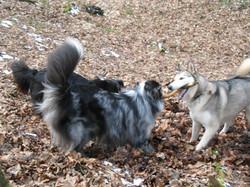 Temo, Tenosh & Laika