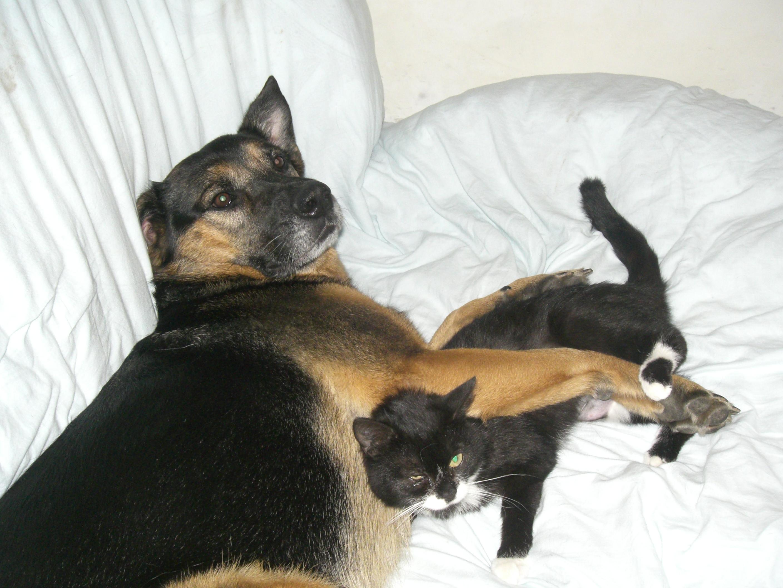 Lilou & Cali (krank)