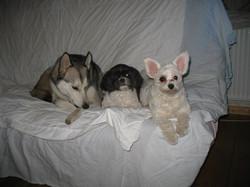 Laika, Misso & Daphné
