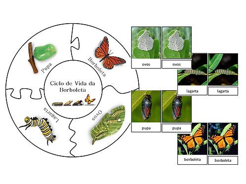 Atividade 2 em 1 Puzzle Ciclo da Borboleta & Nomenclatura Três Partes Montessori