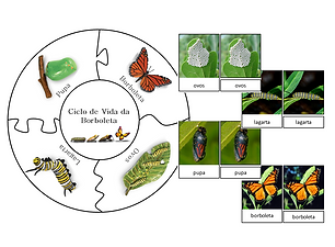 Thumbnail ciclo de vida borboleta.png