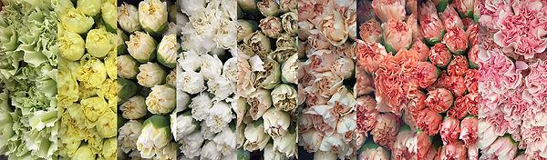 Variedad de colores en claveles