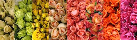 Variedad de colores de rosas