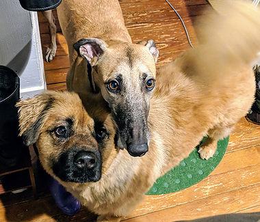 Teddy and Ella Anderson.jpg