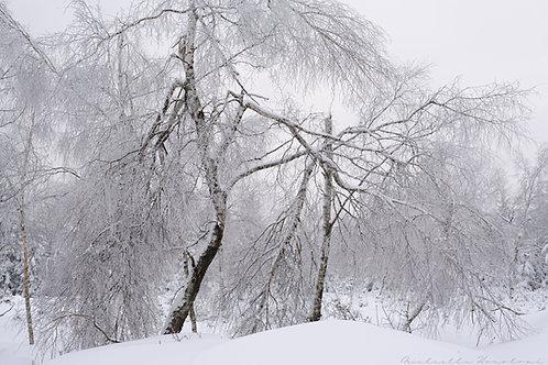 Winter  speaks