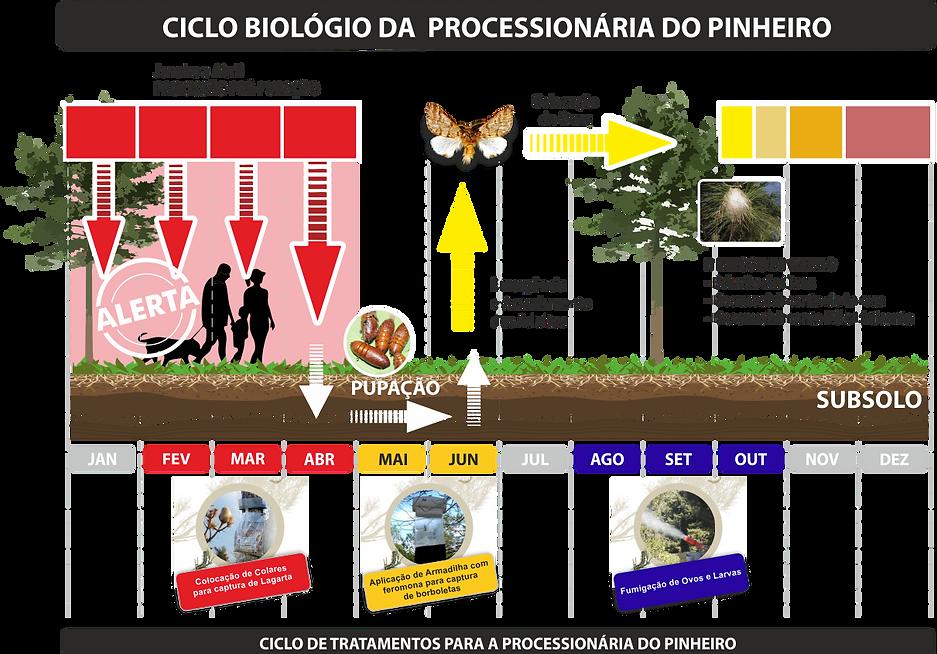 ciclo biologico lagarta do pinheiro ecoprocess