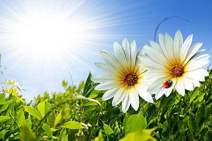 sementes bio nova relva