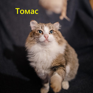 Томас