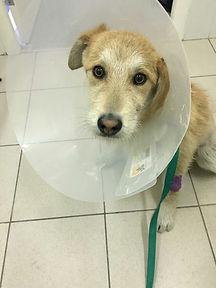 помощь собаке с автотравмой