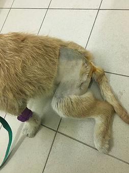 помощь собаке автотравма помощь приюту